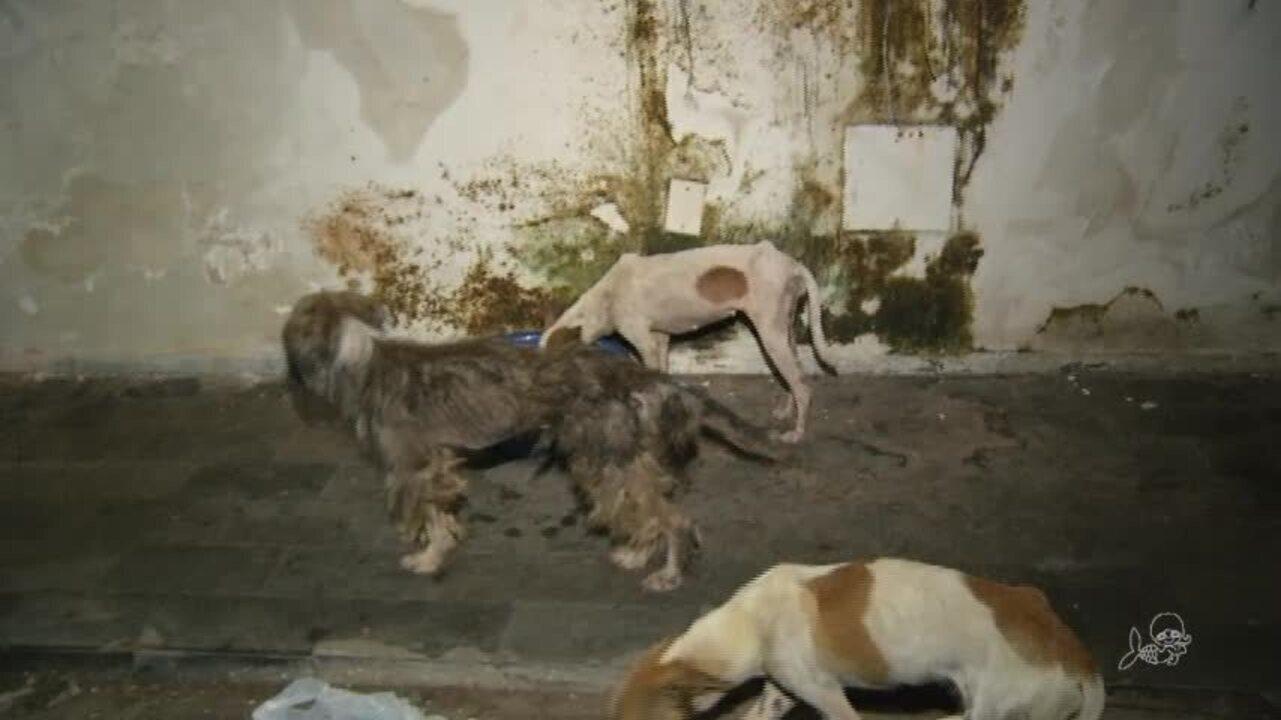 Dezenove animais resgatados de condições em maus-tratos já se encontram em abrigo