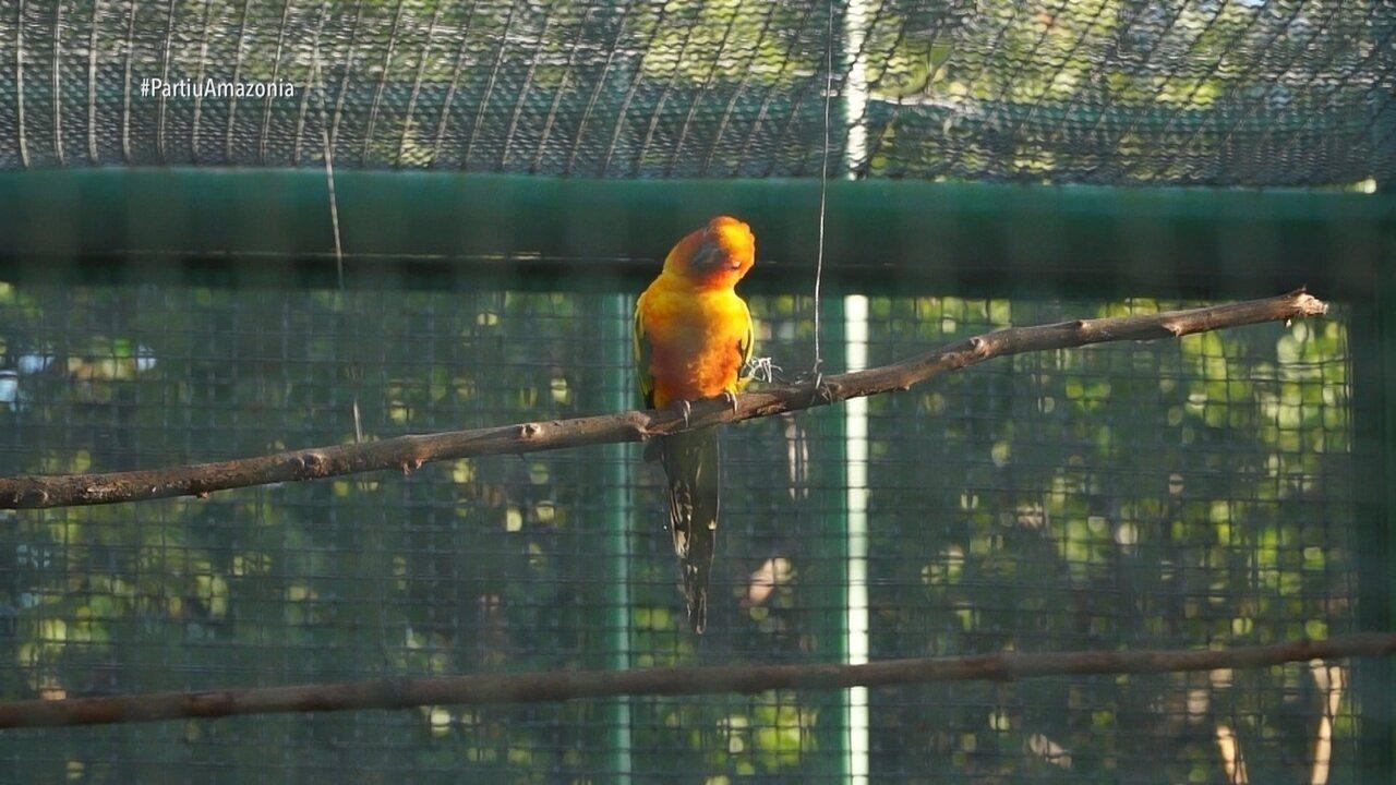 Parte 3: Tem também uma visita ao Parque Ecológico Bosque dos Papagaios