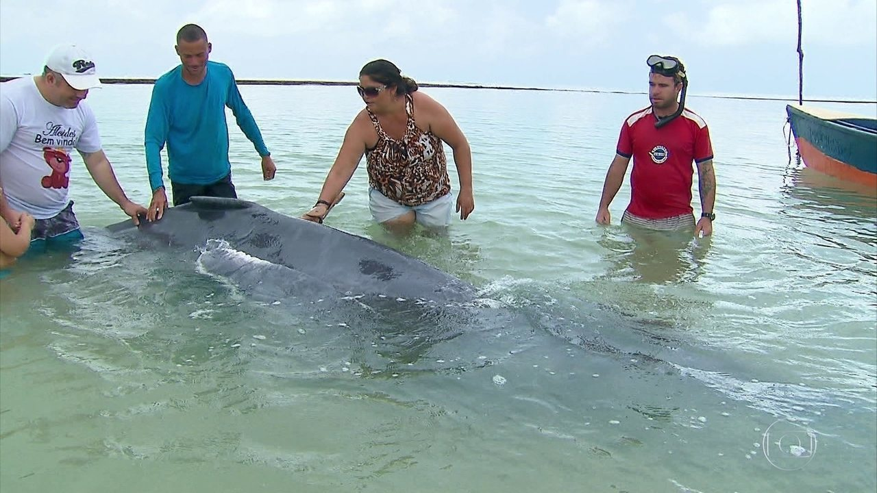 Filhote de baleia jubarte encalha em praia de Pernambuco
