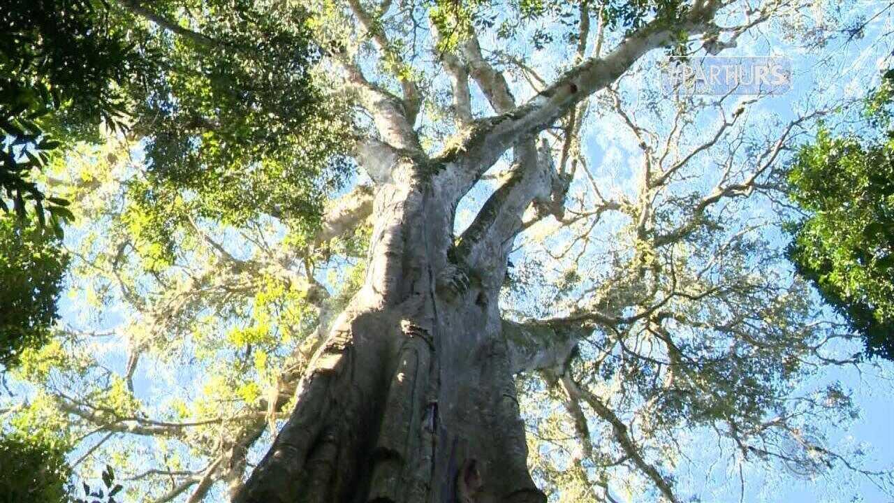 Partiu RS: conheça a cultura e paisagens de Vale Verde