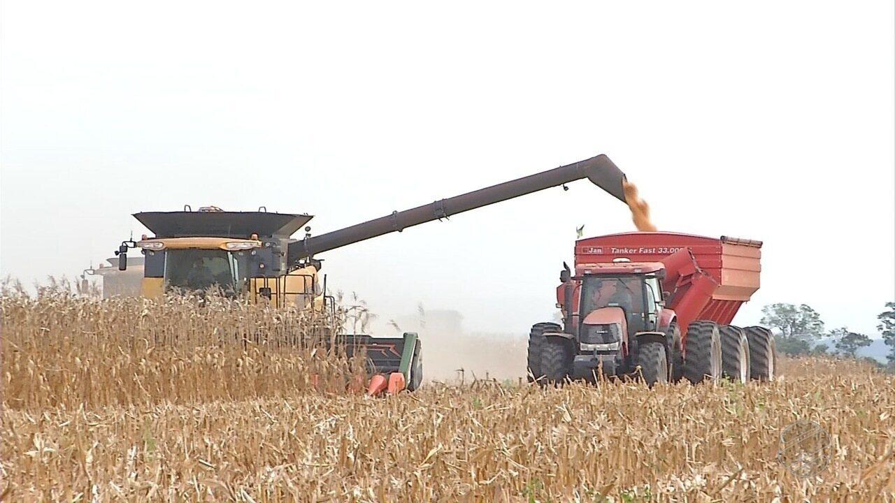 Colheita do milho está praticamente encerrada em MT