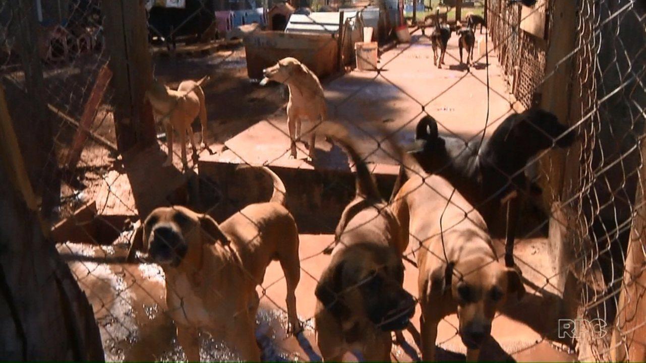 Associação Defensora dos Animais de Londrina está fechando as portas