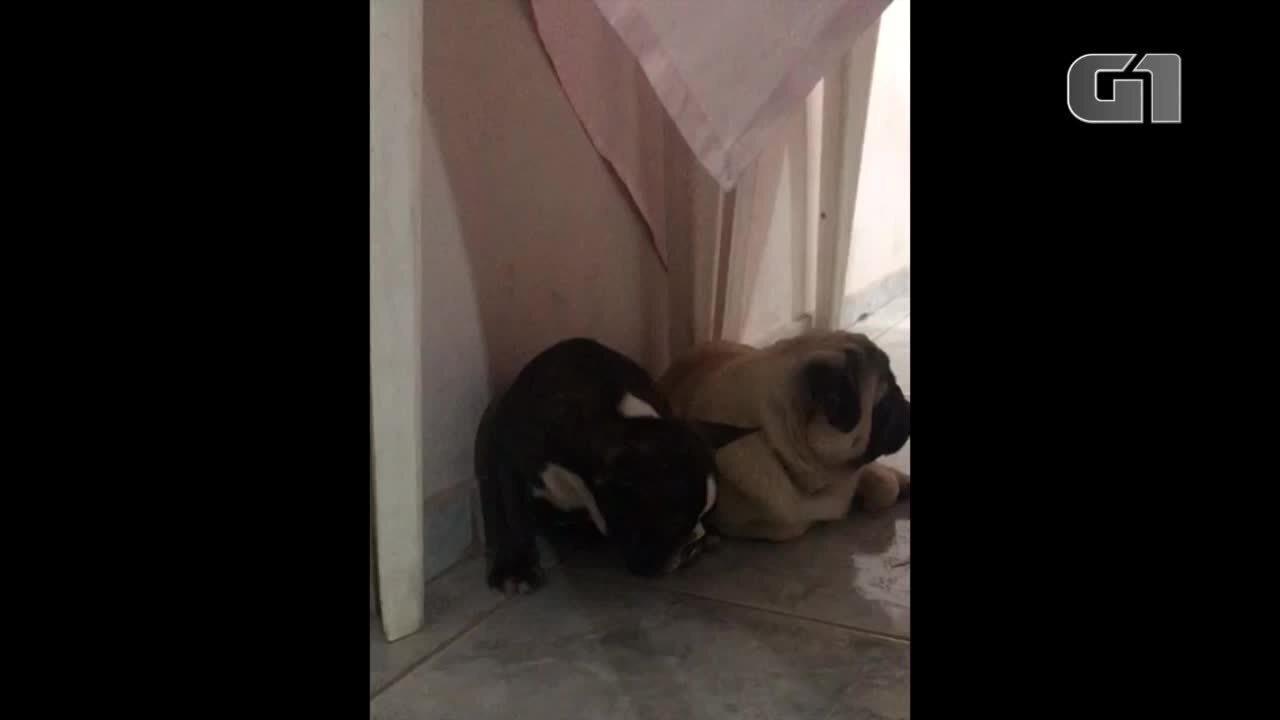 Theobaldo ficou tão cansado durante o aniversário da Mel que dormiu sentado