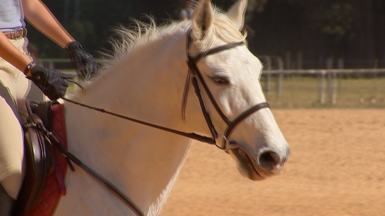 Criadores de cavalos comentam sobre a montaria com ou sem embocadura ... 3fe0f60f3e6