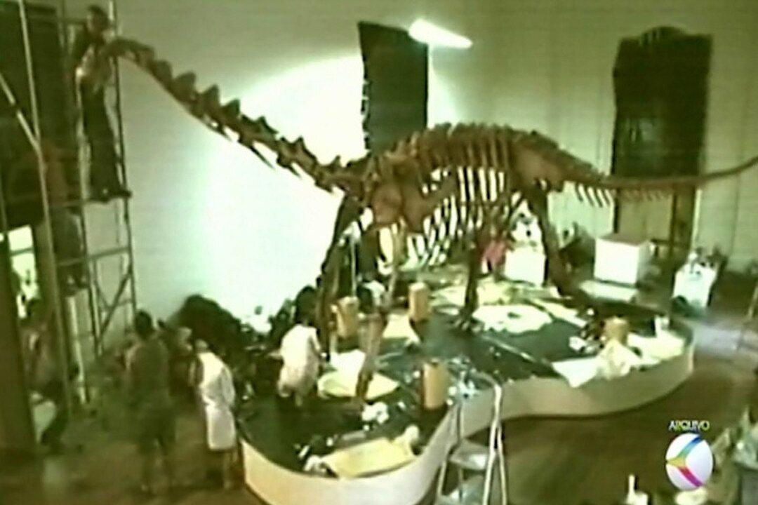 Primeiro dinossauro de grande porte montado no Brasil estava guardado no Museu Nacional