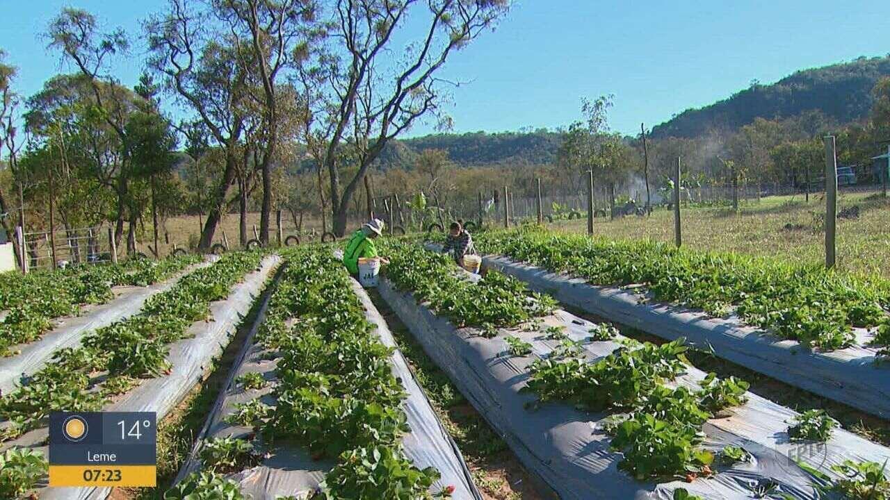 Consumo de produtos orgânicos cresce em cidades da região