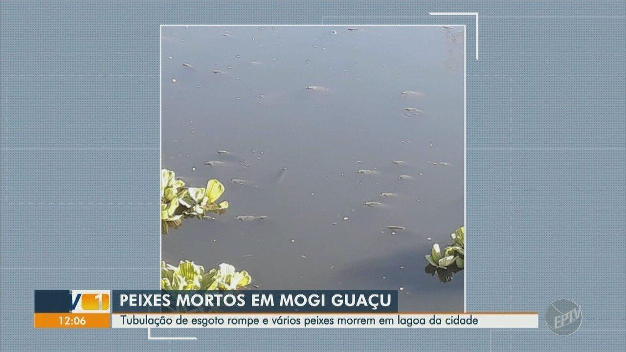 Rede de esgoto estoura perto de lagoa e causa problema ambiental, em Mogi Guaçu