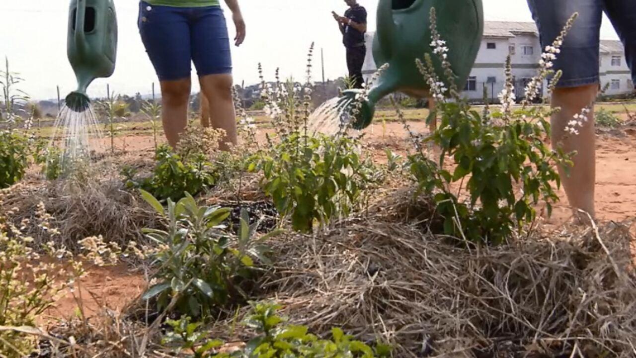 Horta em condomínio reaproveita lixo orgânicos dos moradores