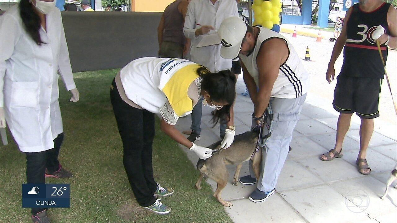 Cães e gatos são vacinados contra a raiva no Recife