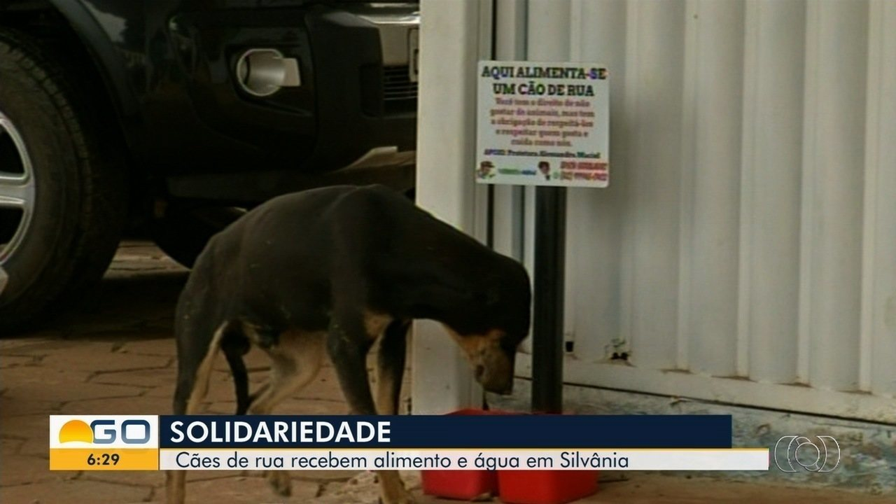 Moradores de Silvânia mantêm comedouros cheios de ração e água para cachorros de rua