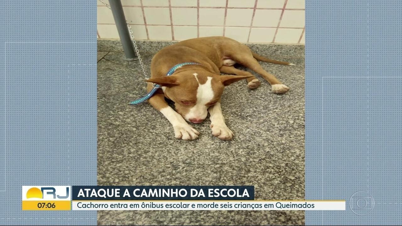 Crianças são atacadas por cachorro em Queimados, na Baixada Fluminense