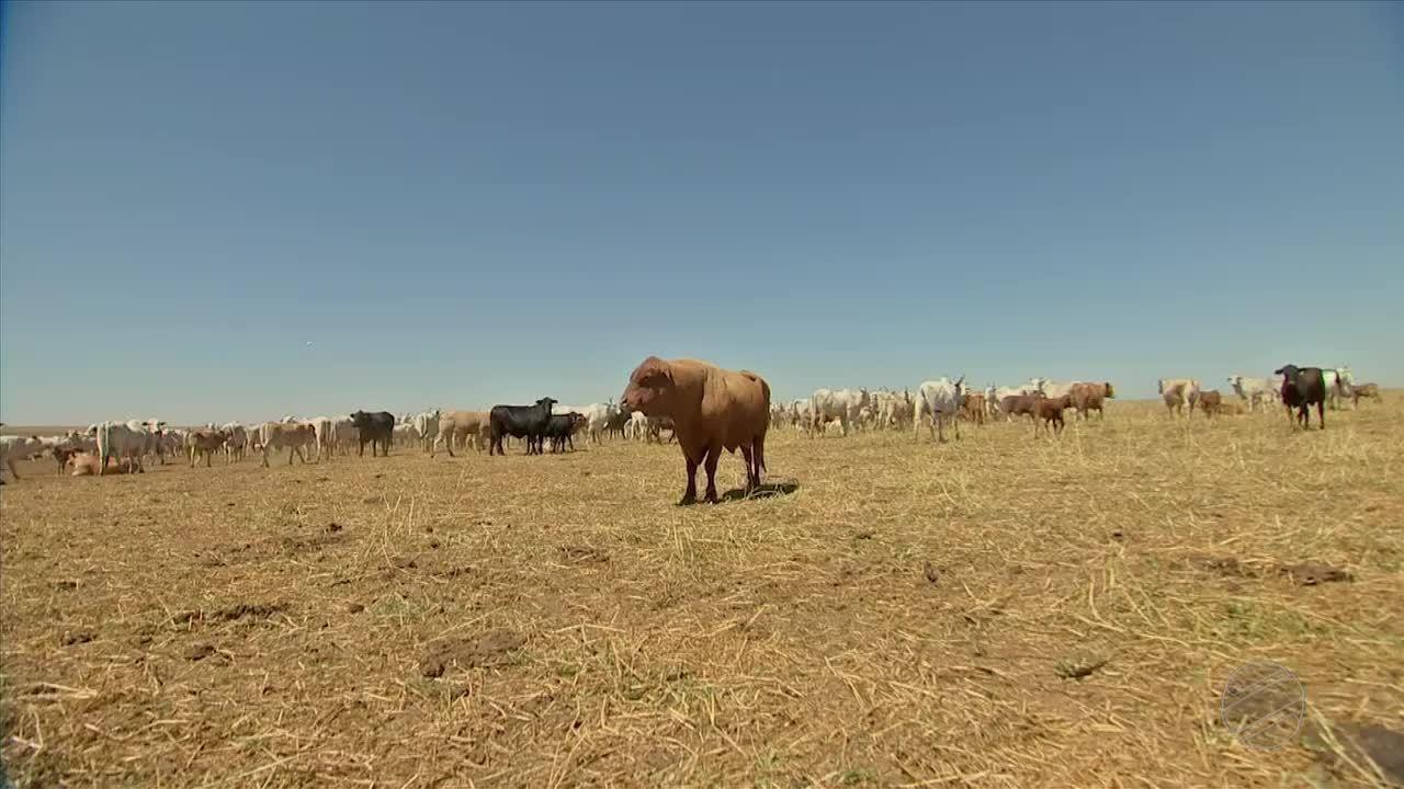 Integração lavoura-pecuária ocupou 1,9 milhão de hectares em MT
