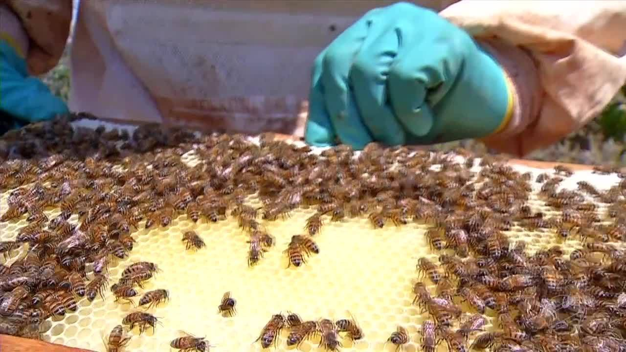 Criação de abelhas no cerrado otimiza áreas de preservação em fazenda