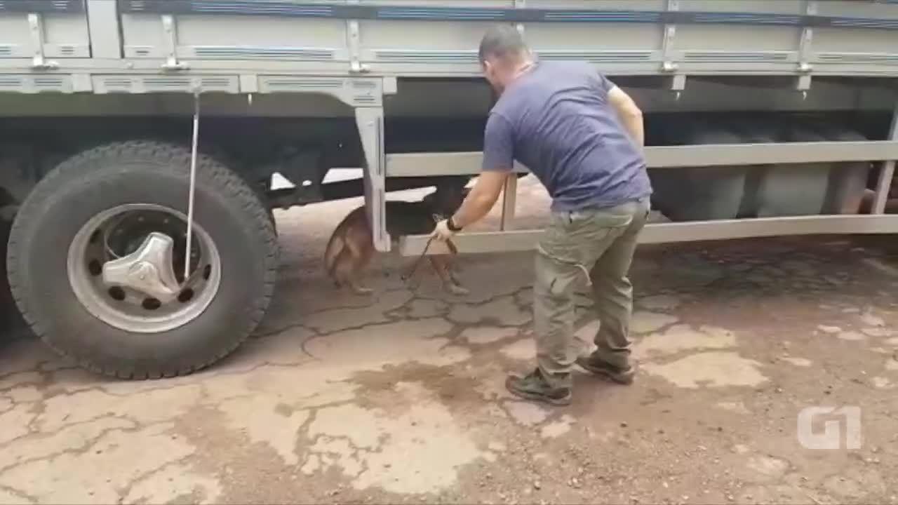 Cães farejadores da PF acham 36 quilos de droga em cilindro de freio de caminhão na BR-364
