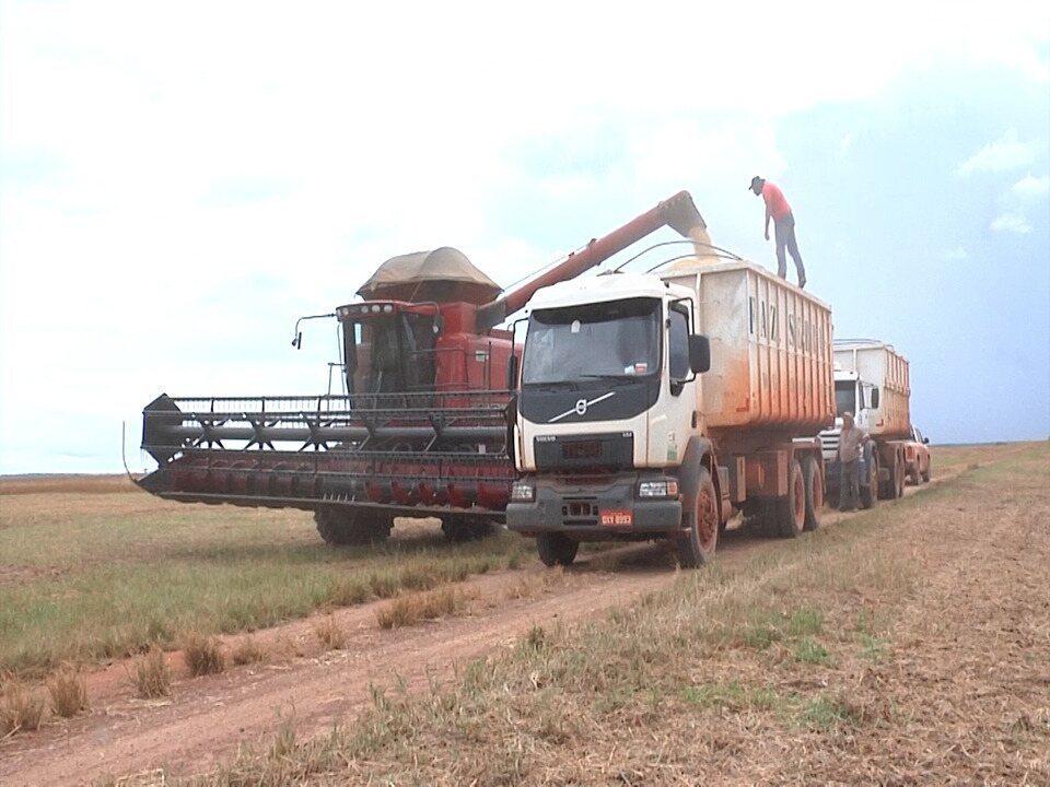 Conab divulga números da safra da soja no MA e agricultores contestam resultado