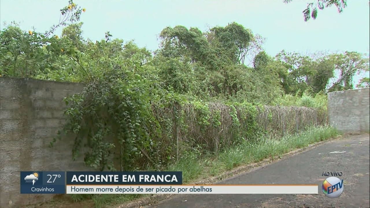 Homem morre depois de ser picado por abelhas em Franca, SP