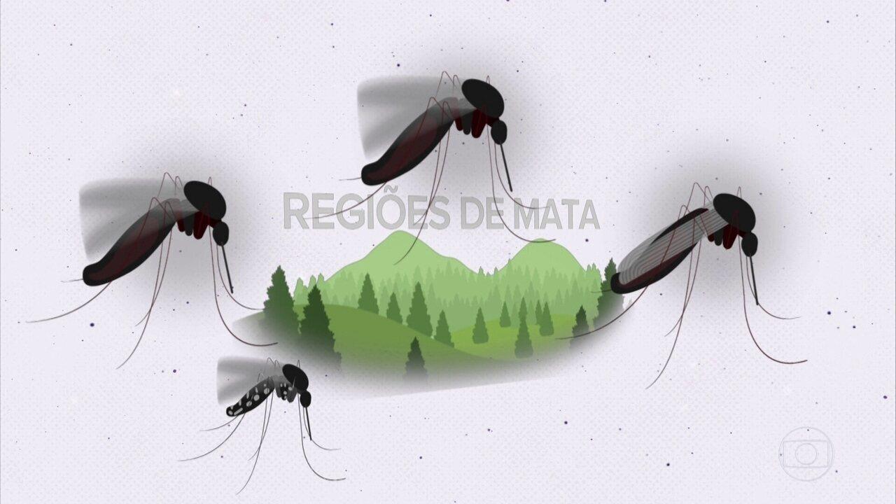 Projeto Educação: entenda o que são as arboviroses e a relação com o meio ambiente