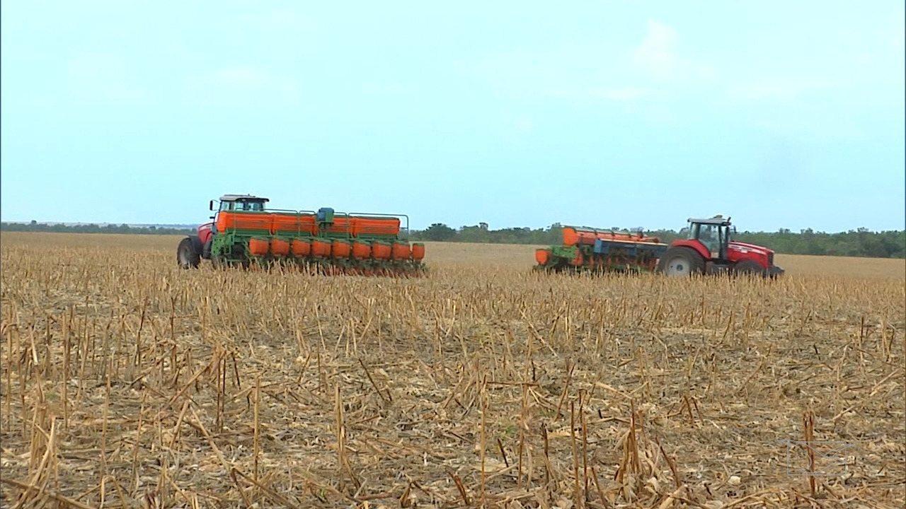 Mirante Rural mostra que agricultores aproveitam chuvas para plantio da soja no MA