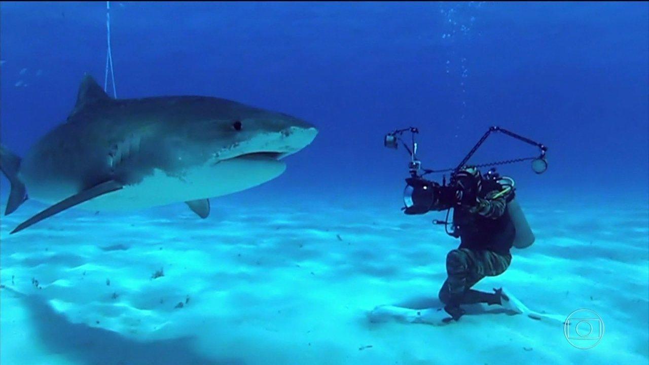 Domingão Aventura: Cristian Dimitrius conta curiosidades sobre tubarões