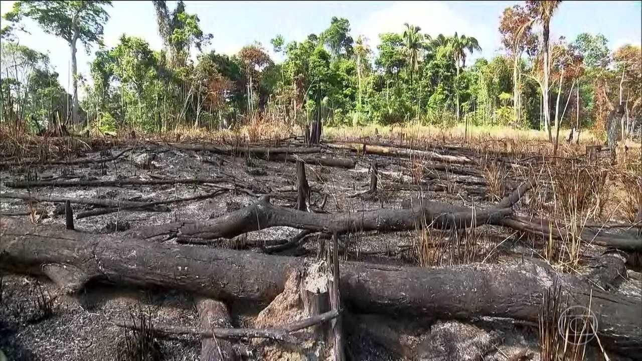 Relatório faz alerta sobre futuro da biodiversidade do planeta