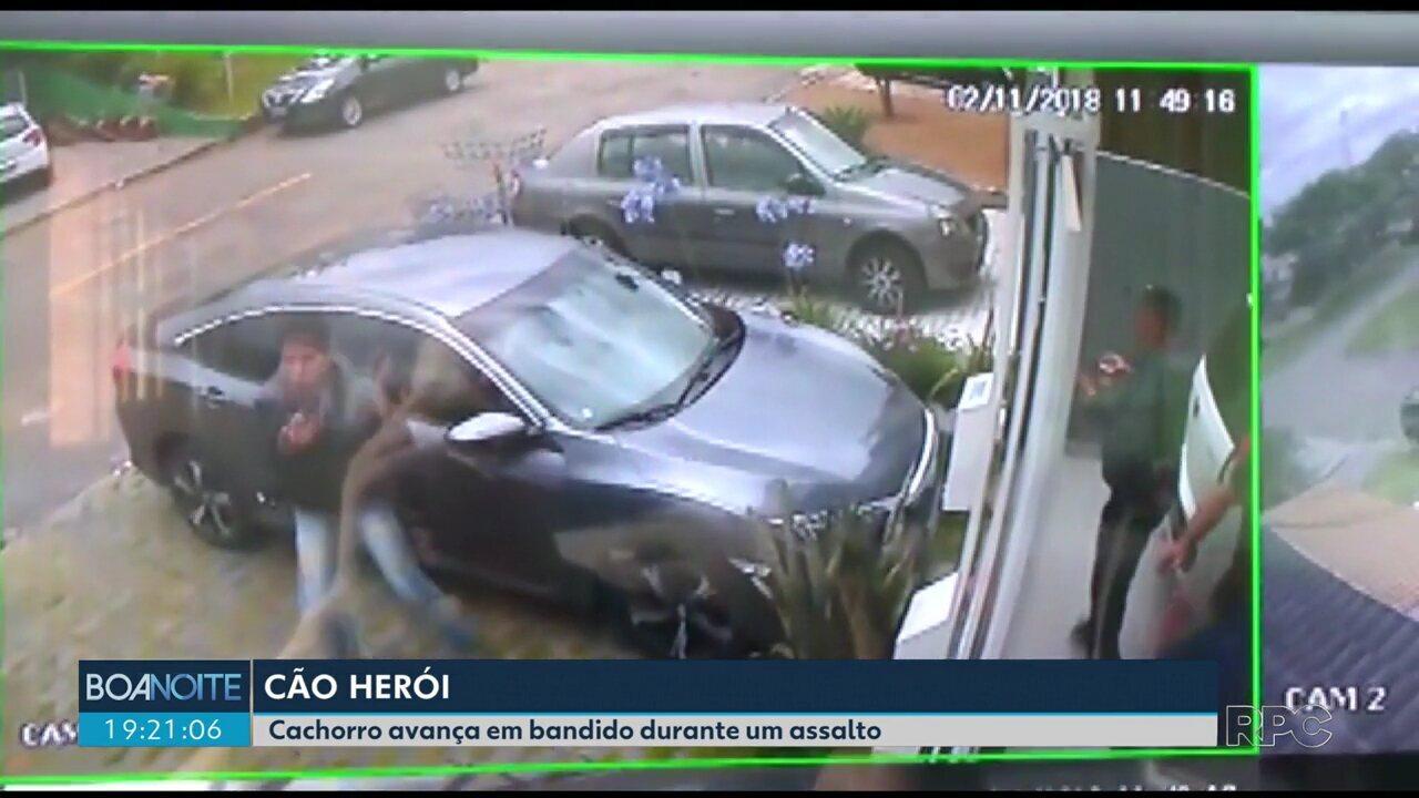 Cachorro consegue evitar que donos sejam assaltados, em Curitiba