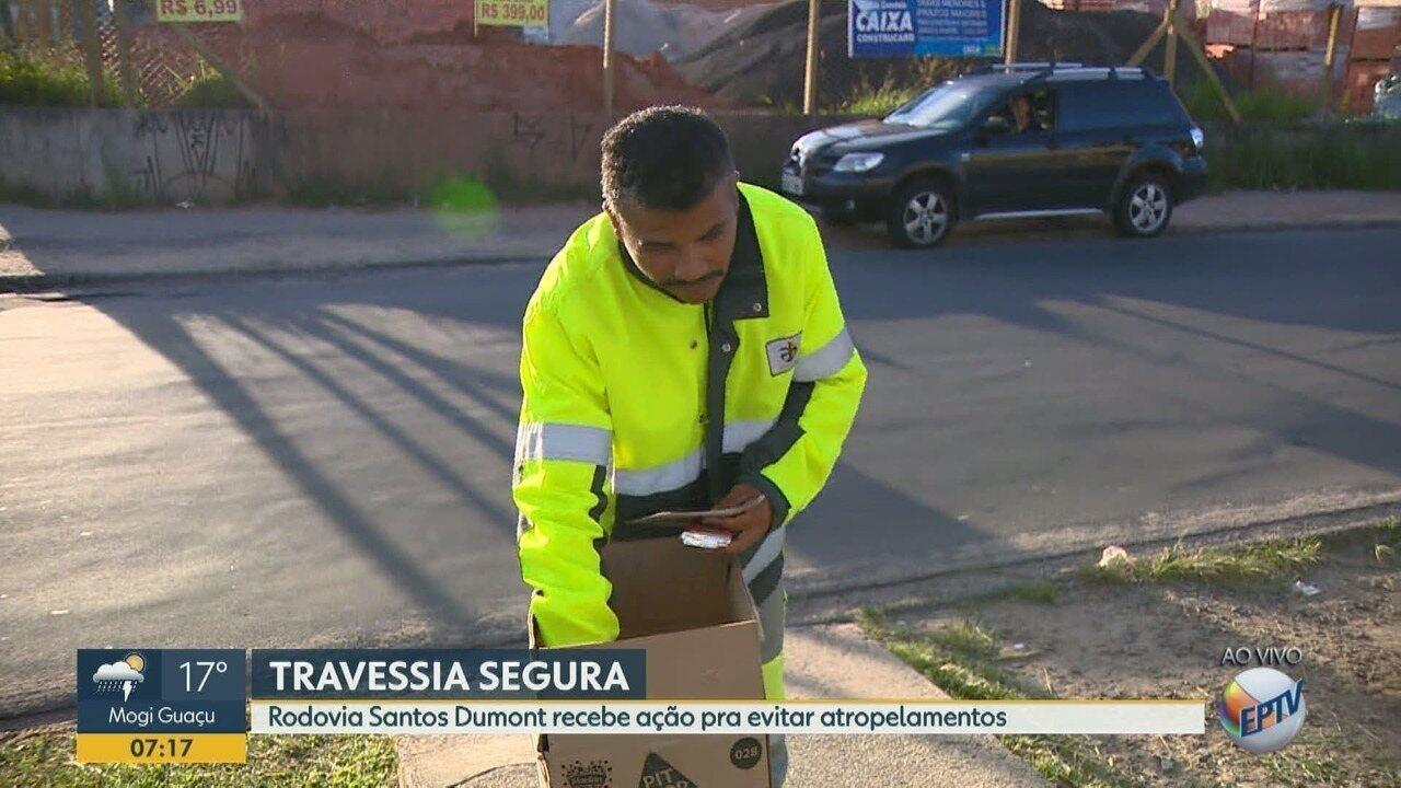 Rodovia Santos Dumont, em Campinas, tem ação contra atropelamentos