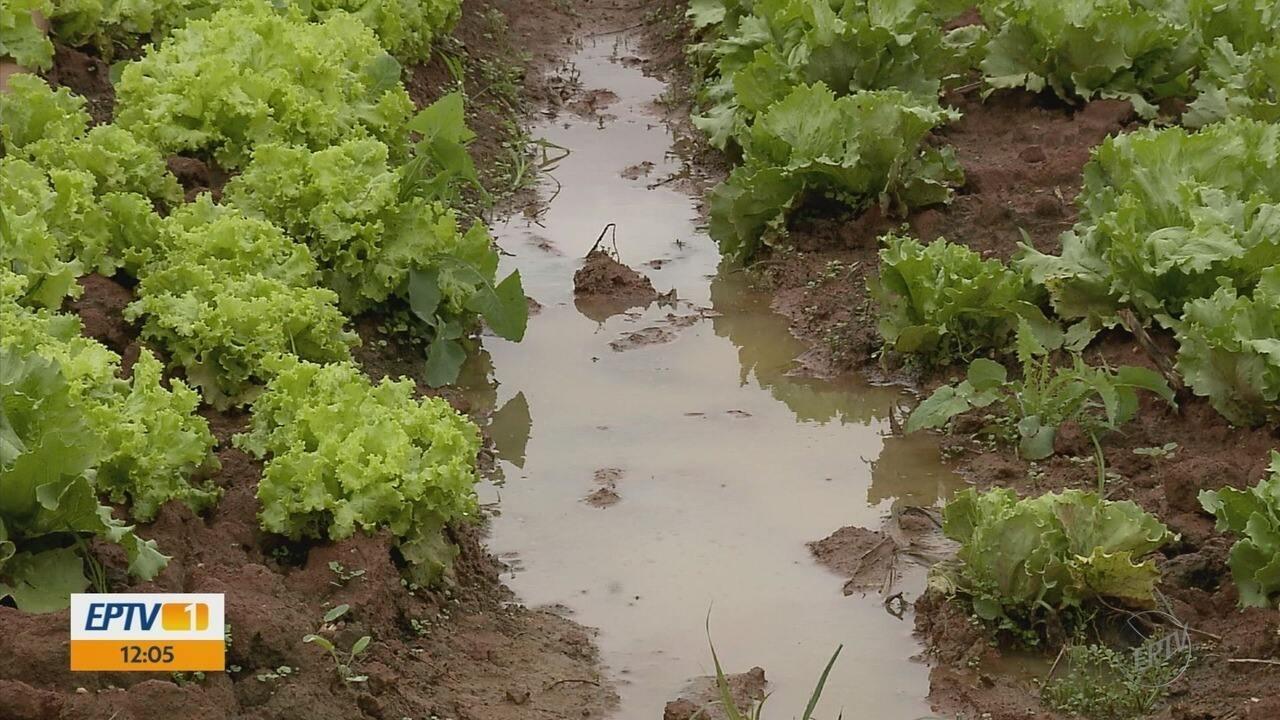 Chuva prejudica produção de hortaliças no Sul de Minas
