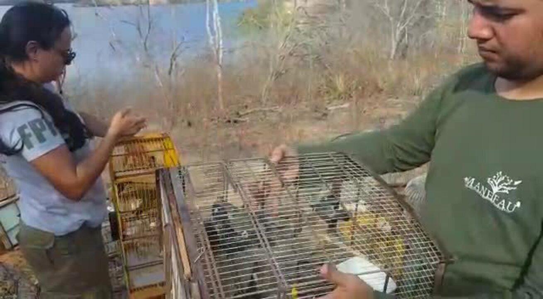 Aves apreendidas em fiscalização são devolvidas à Natureza