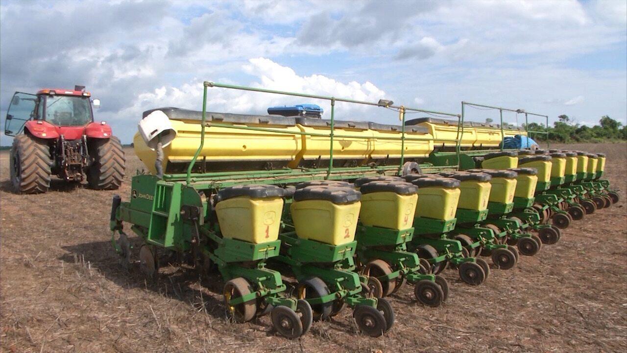 Plantio de soja é destaque no Mirante Rural