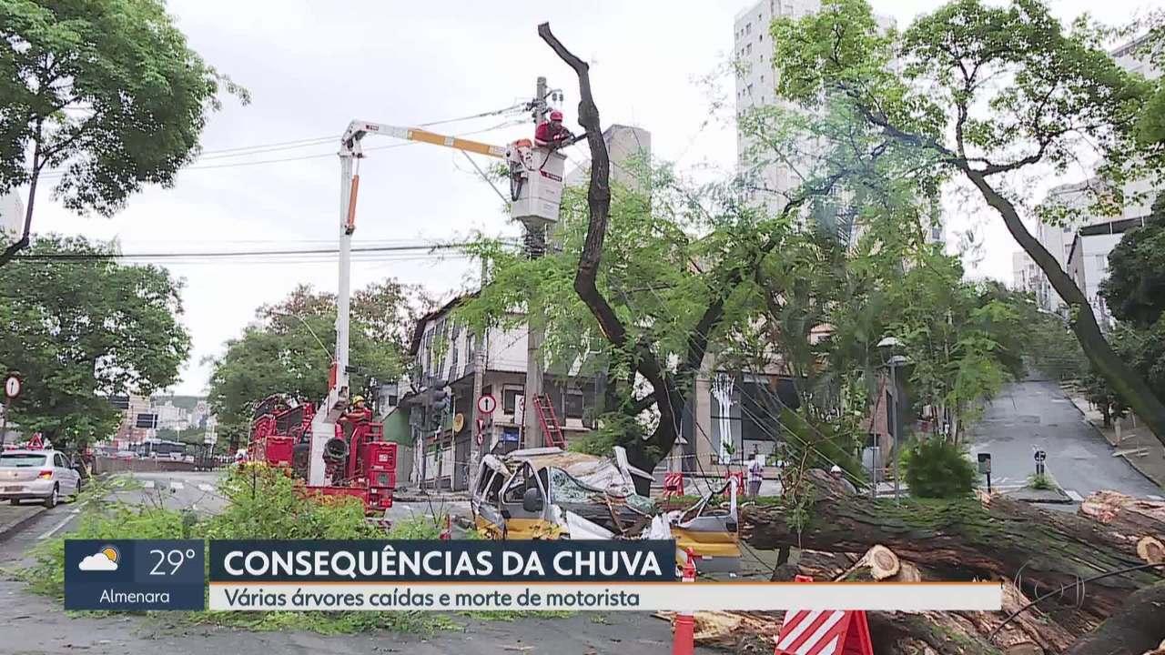 Chuva forte derruba árvore na Savassi, em BH, e motorista de escolar morre