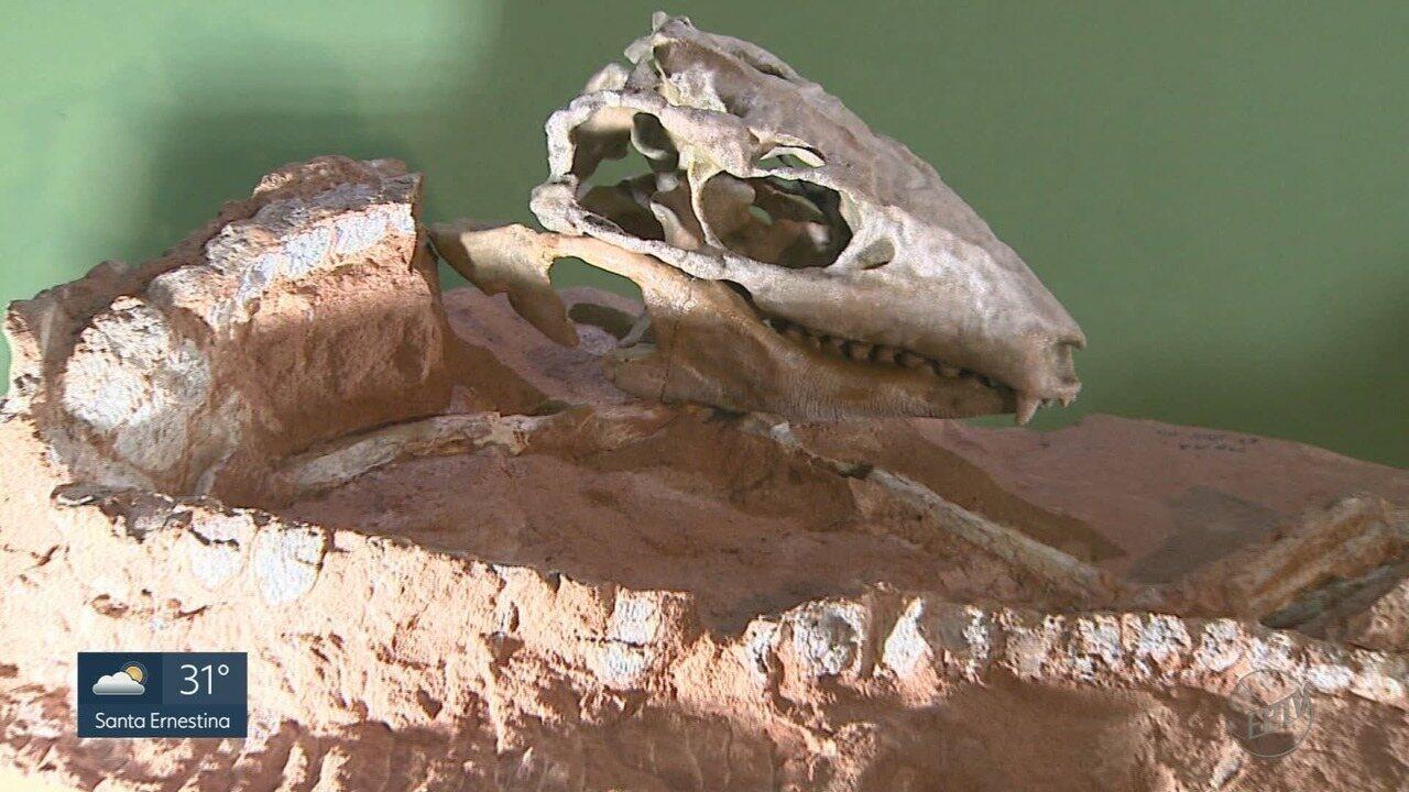 G1 produz série especial sobre as descobertas paleontológicas em Monte Alto, SP