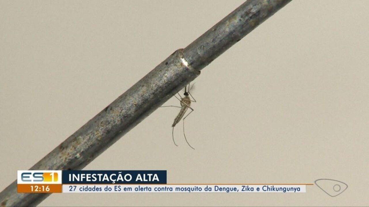 Vitória e mais 27 cidades do ES têm alerta para dengue, zika e chikungunya