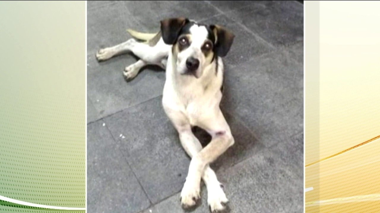 Polícia de São Paulo conclui o inquérito do caso do cachorro Manchinha