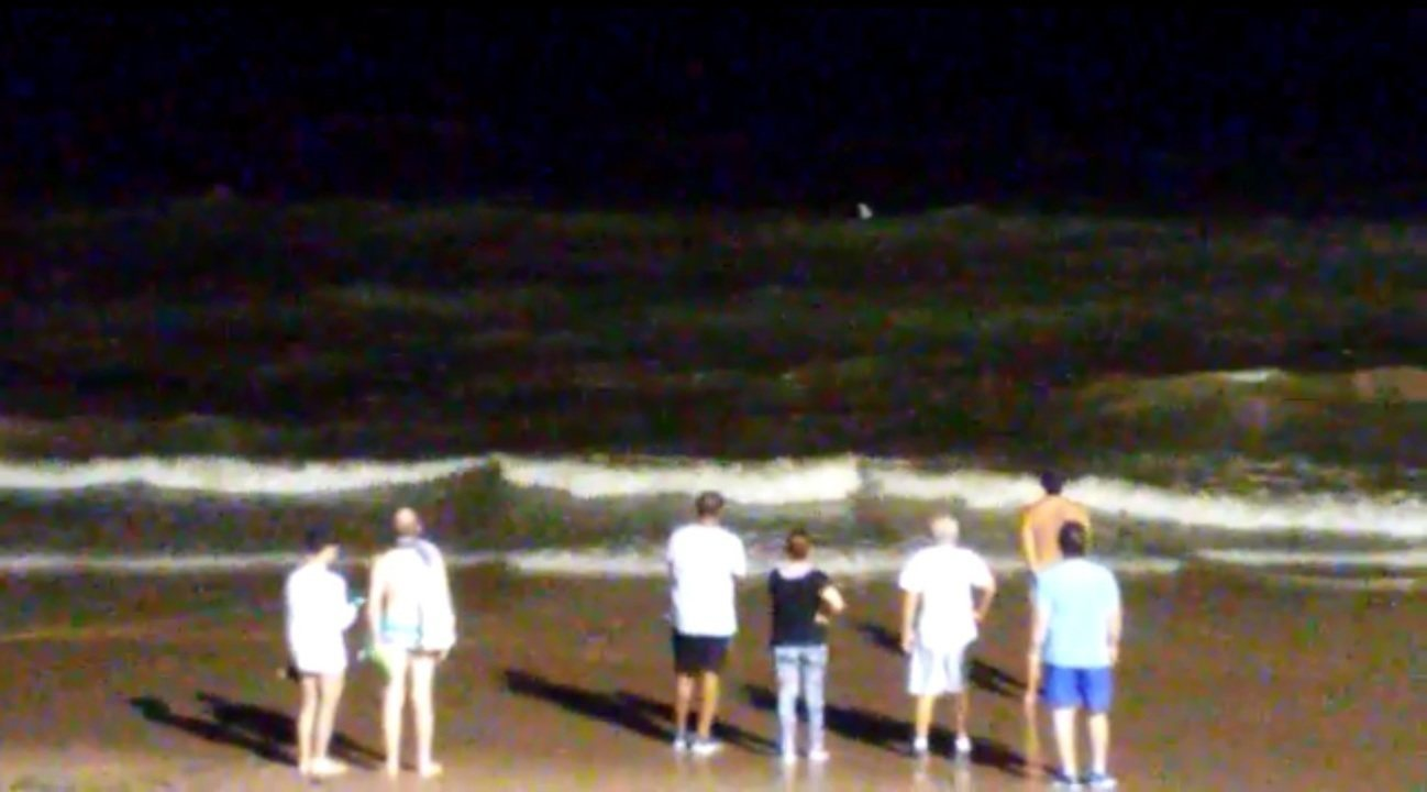 Tubarões nadam próximo à faixa de areia da praia da Jatiúca, em Maceió