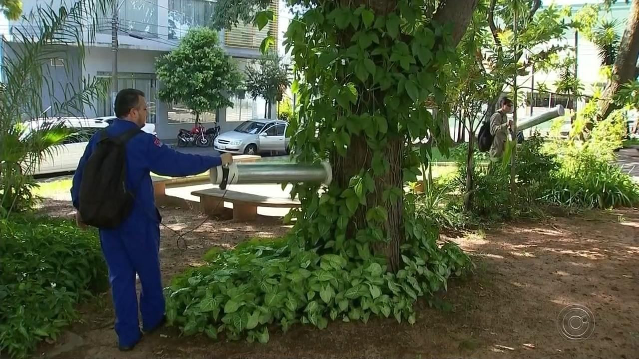 Novo tipo de dengue coloca Bauru sob risco de surto da doença