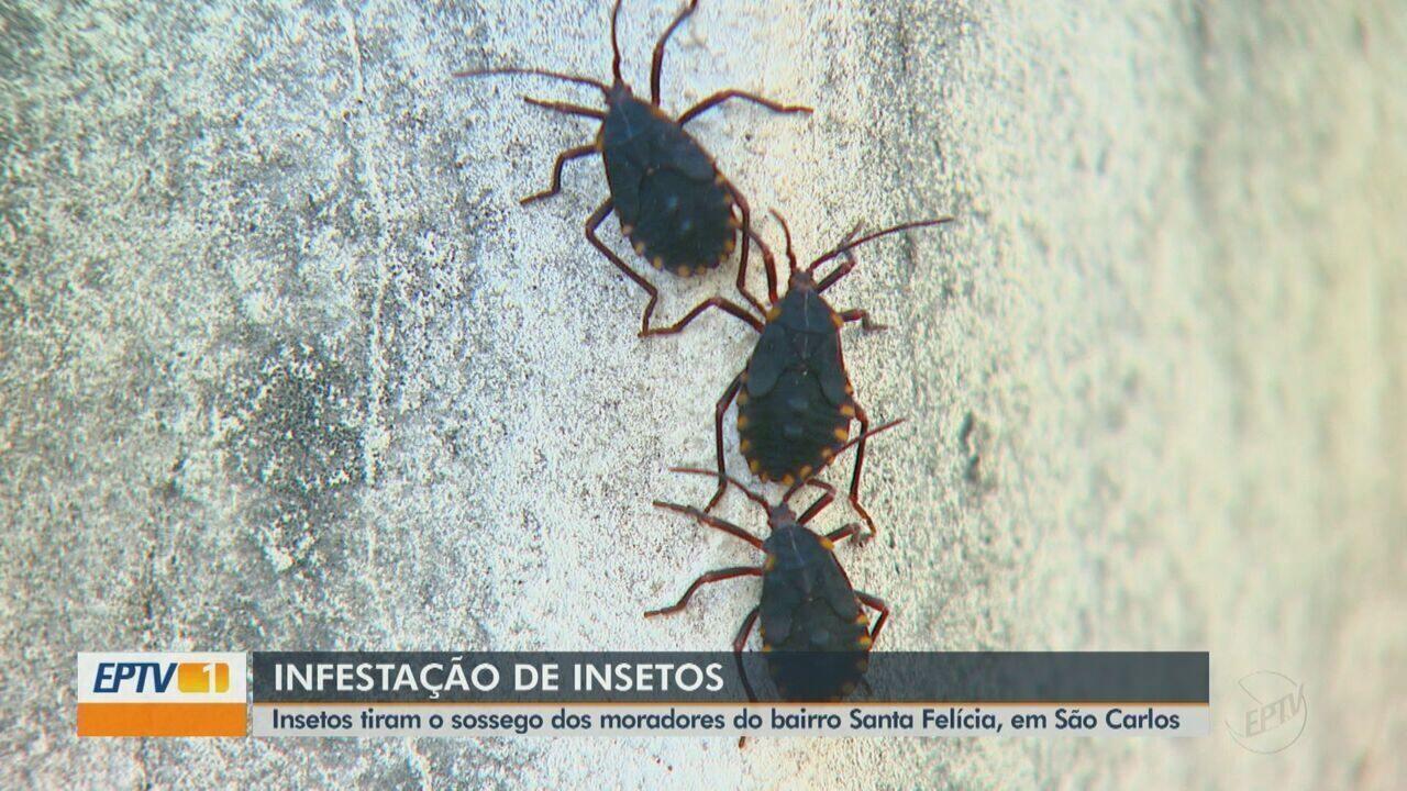 Moradores reclamam da invasão de insetos em São Carlos