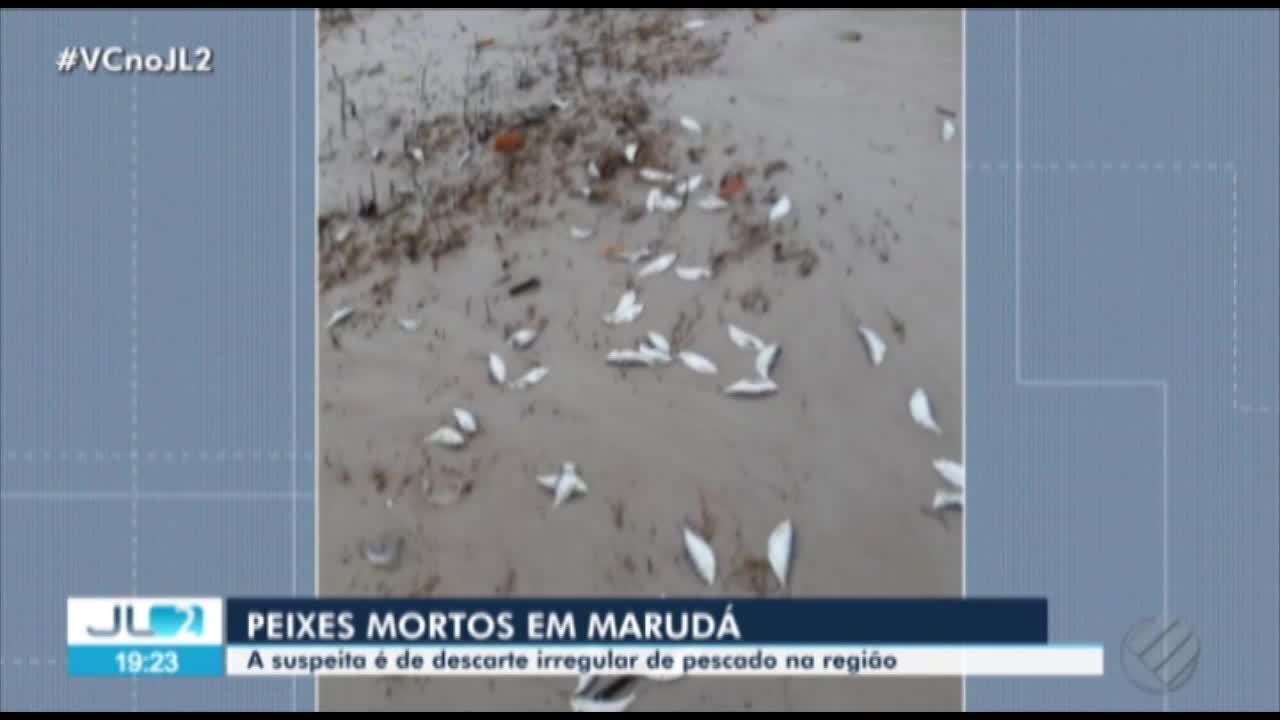 Moradores de Marudá, no Pará, registram peixes mortos espalhados pela praia