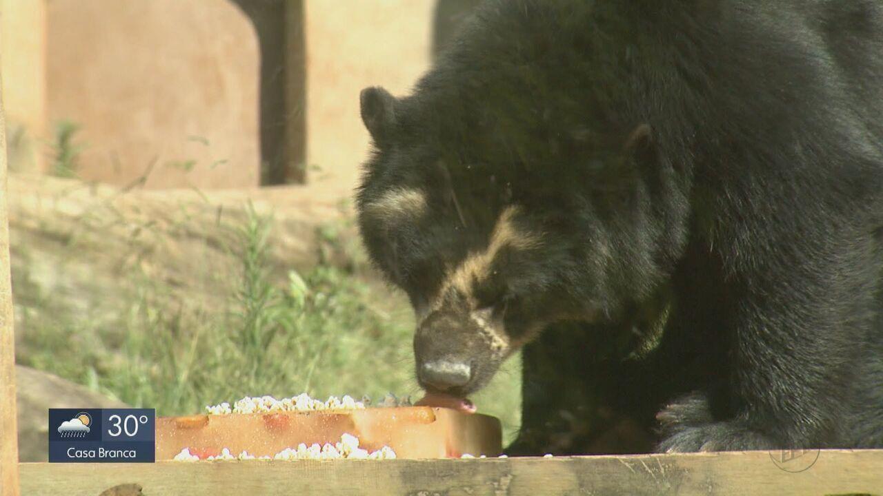 Bichos do Parque Ecológico de São Carlos ganham sorvete pra combater o calor