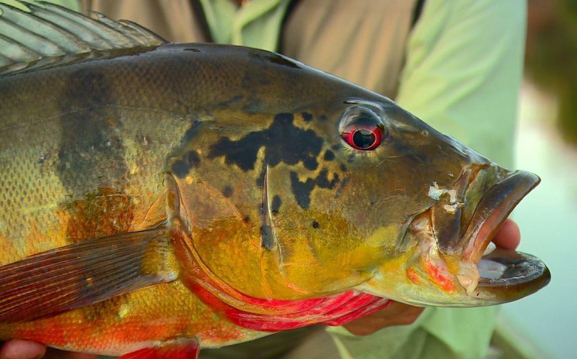 Pescaria no rio Itapará