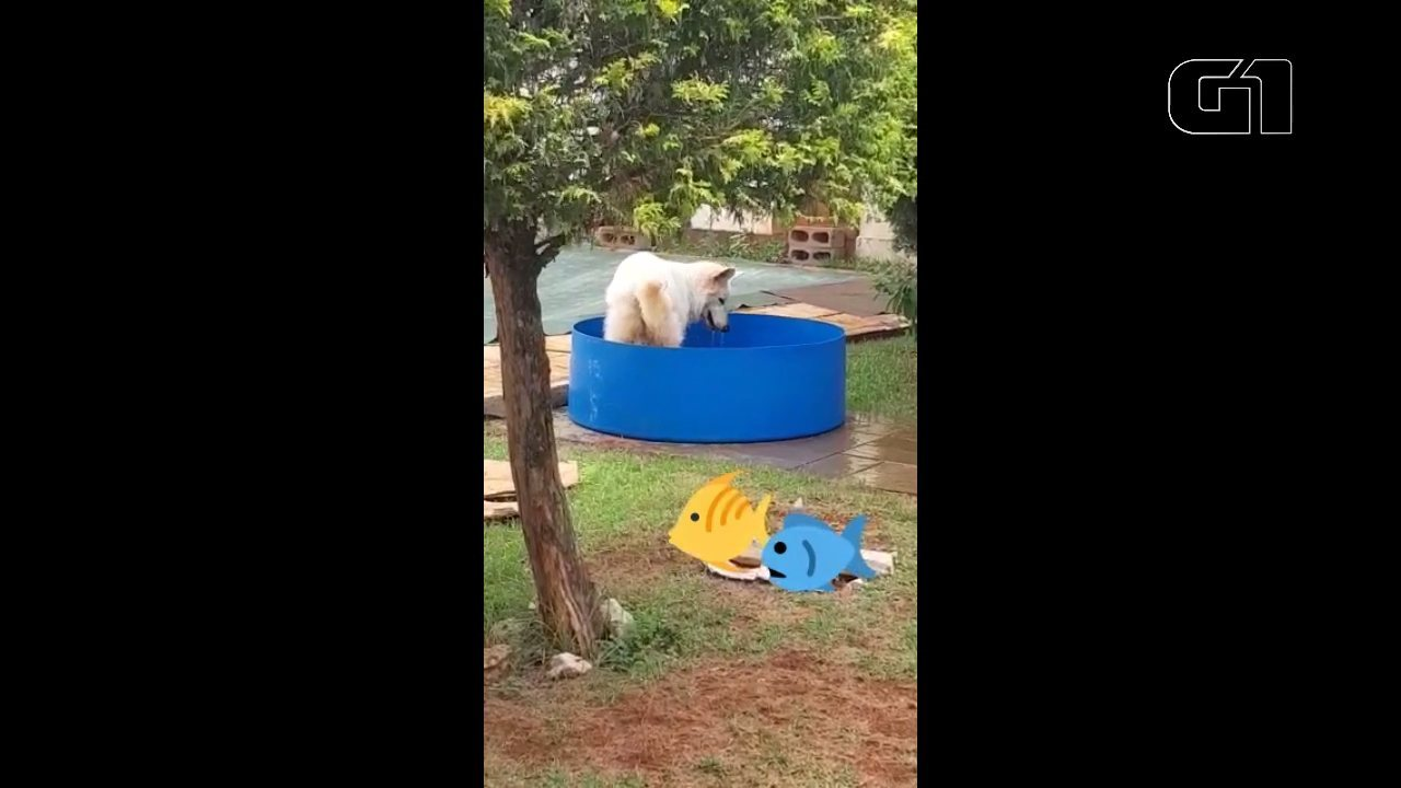 Lazuli se diverte na piscina improvisada, em Londrina