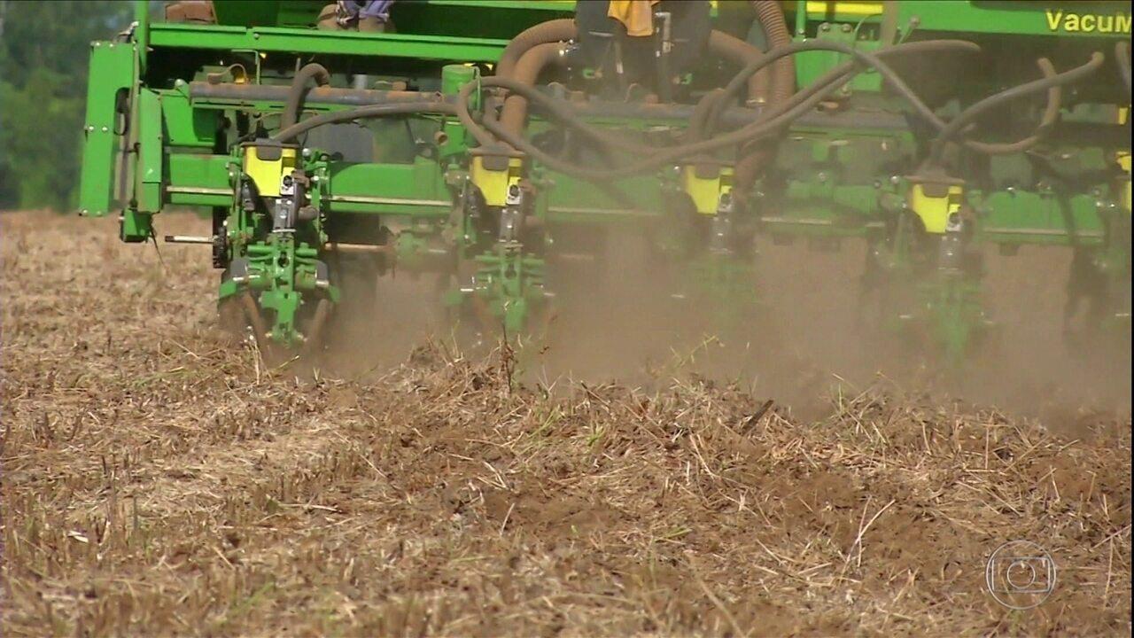 Começa o plantio do milho safrinha em Mato Grosso
