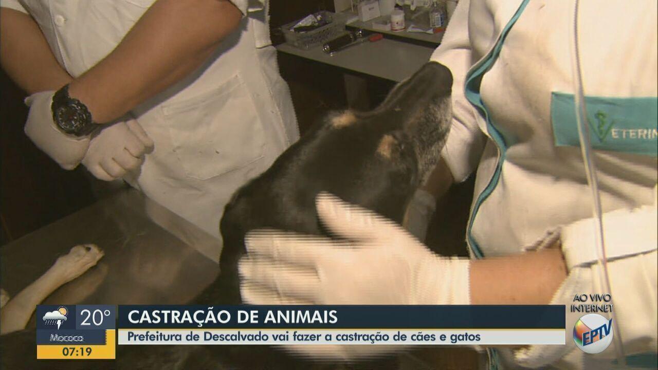 Prefeitura de Descalvado realiza cadastro para castrar cães e gatos