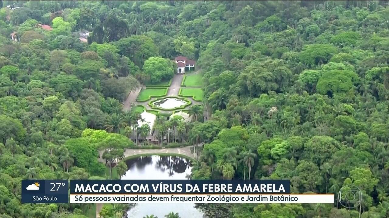 Macaco é encontrado com sinal de infecção pela febre amarela no Jardim Botânico de SP