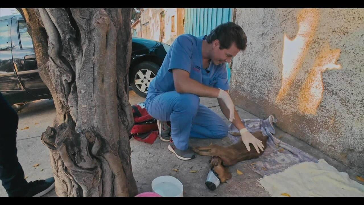 'Vida Animal - Segunda Chance': estreia mostra o trabalho de protetores