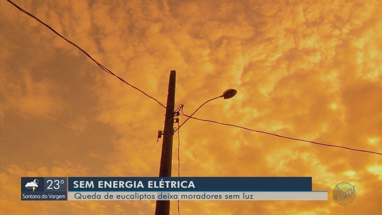 Queda de eucaliptos danifica redes de energia elétrica no Sul de Minas