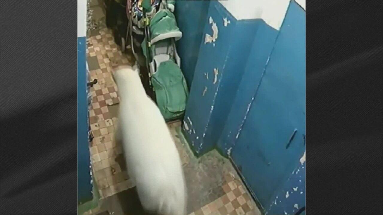 Ursos polares invadem casas em arquipélago na Rússia