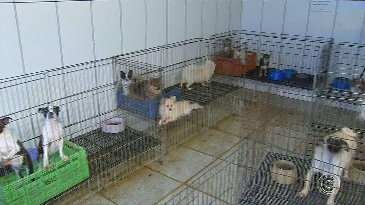 Animais resgatados de canil interditado em Piedade são levados para Mairiporã
