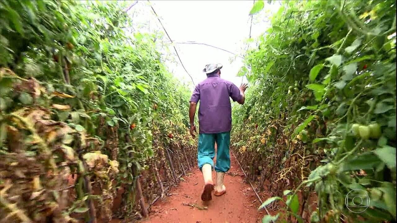 Com reforma da Previdência, trabalhador rural não poderá se aposentar por idade sem nunca