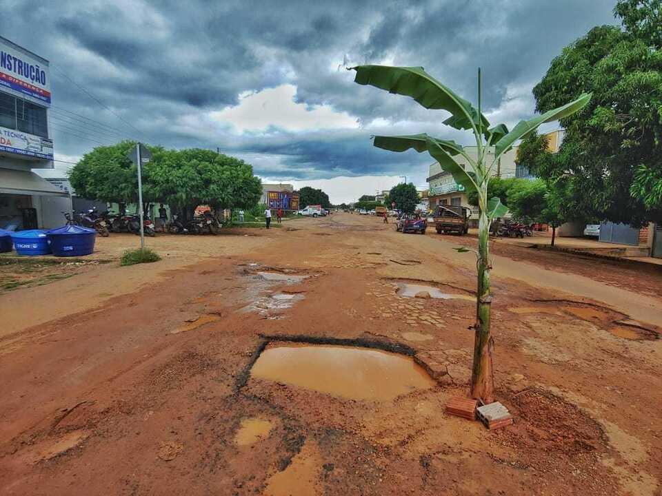 Bananeira é plantada no meio da avenida como protesto a buracos