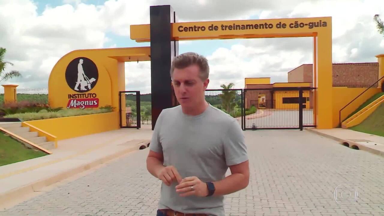 Luciano Huck visita centro de treinamento de cães guias